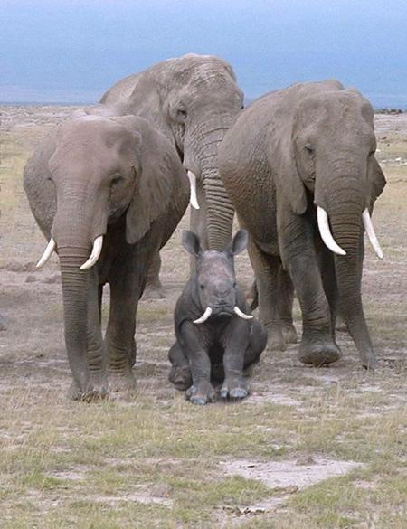 Identity Theft Elephant