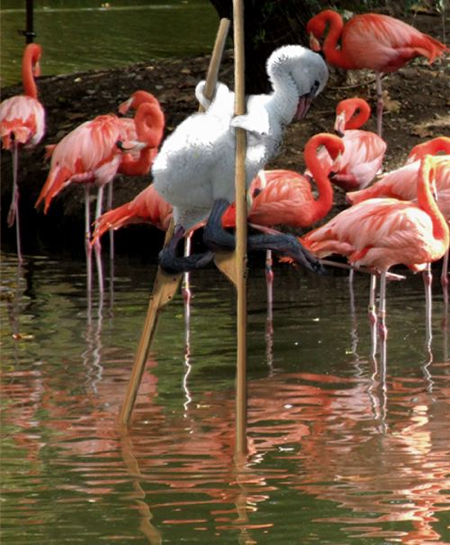 Identity Theft Flamingos