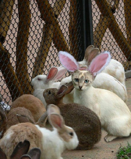 Identity Theft Rabbits